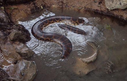 Perlis Snake Park